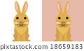 動物 寵物 毛小孩 18659183