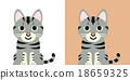 矢量 美國短毛貓(貓) 動物 18659325