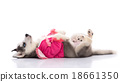 puppy in clothes on a white background 18661350