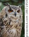 bengal, eagle, owl 18671950