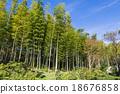 竹叢 風景 總和 18676858