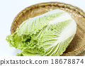 Chinese cabbage 18678874