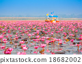 Sea of pink lotus, Nonghan, Thailand 18682002