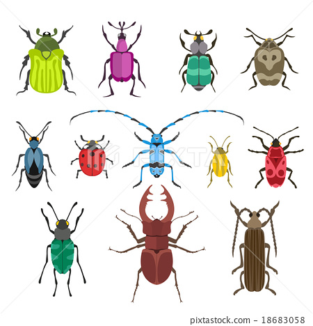 Colorful insects vector biology collection 18683058