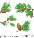 Pine Branches Set 18689612