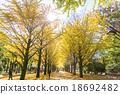 【东京】Ginkgoega Park的银杏树 18692482
