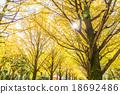 【东京】Ginkgoega Park的银杏树 18692486