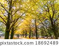 【东京】Ginkgoega Park的银杏树 18692489