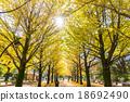 【东京】Ginkgoega Park的银杏树 18692490