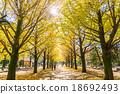 【东京】Ginkgoega Park的银杏树 18692493
