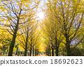 【东京】Ginkgoega Park的银杏树 18692623