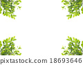 Green leaves frame isolated on white background 18693646