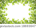 Green leaves frame isolated on white background 18693647