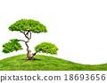 Bonsai tree isolated on white background 18693656