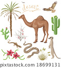 Desert plants and animals set 18699131