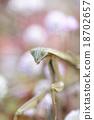 蟲子 漏洞 昆蟲 18702657