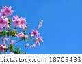 花朵 花 花卉 18705483