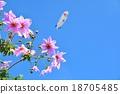 花朵 花 花卉 18705485