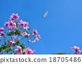 花朵 花 花卉 18705486