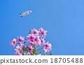 花朵 花 花卉 18705488