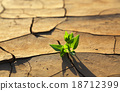 Plant growing through dry cracked soil 18712399