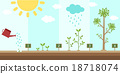 flat background of planting tree process 18718074