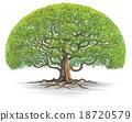 Big tree03 18720579