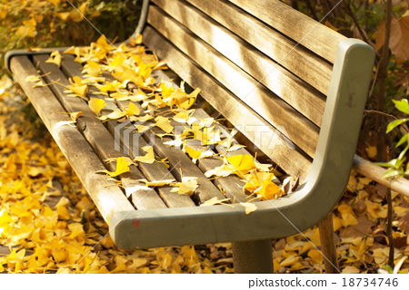 Bench of ginkgo trees 18734746