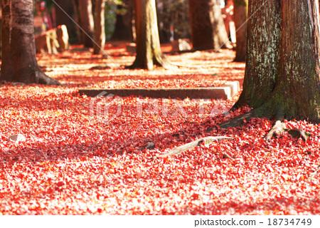 Dead leaves of seasonal trees 18734749
