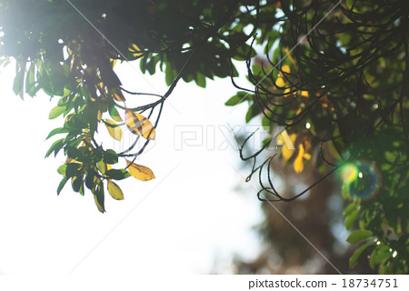 太陽光樹枝 18734751