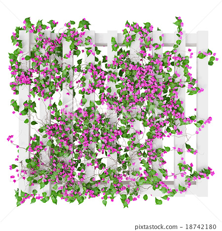 Flowers Pink Plant Top View