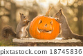 halloweens together 18745836