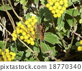 석양에 비추어 져 이소기쿠에 그쳤다 나비 18770340