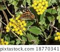 석양에 비추어 져 이소기쿠에 그쳤다 나비 18770341