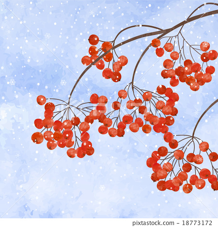 Winter background with  branches rowan berry 18773172