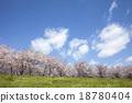 Cherry Blossoms 18780404