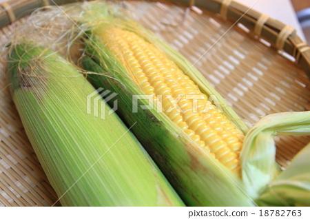 Corn corn sugarcane 18782763