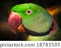Parrot. 18783505
