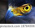 Serpent-Eagle 18784006