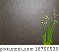 Flower onion for cooking and health. 18790530