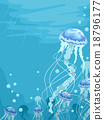 Jellfish Jellyfish 18796177