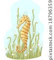 Sea Horse 18796359