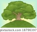 Giant Tree 18796397