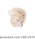One isolated sea shell 18812476
