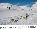 The Greenland sled dog 18814061