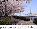 樱花盛开Sumidagawa Nagashiro桥 18835613