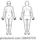 人體前後 18840759