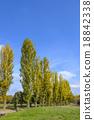 푸른, 하늘, 포플러 18842338