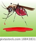 common house mosquito 18843831