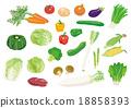 蔬菜 矢量 切 18858393